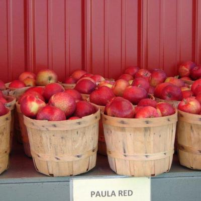 Hoyt Orchards Gallery 03a